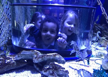Bristol Aquarium Visit - Reception Classes